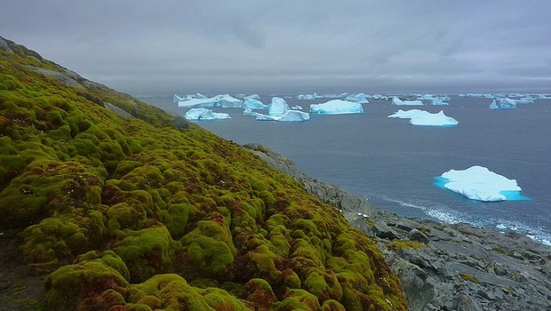 Climate change is turning Antarctic green